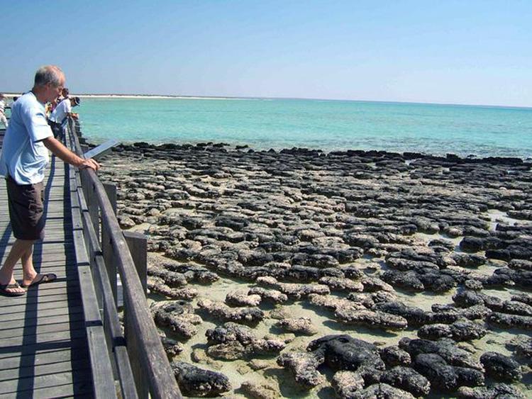 estromatolitos-fosiles