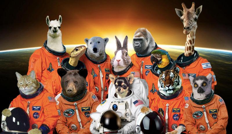animales-en-el-espacio