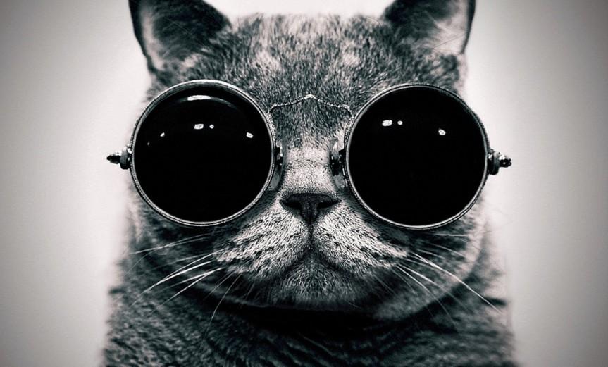 gato-de-schrodinger
