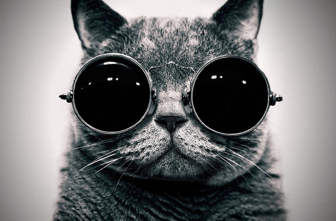 Resultado de imagen de gato Schrödinger