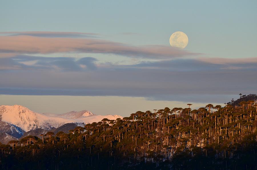 """MENCIÓN HONROSA 2   Título: """"Ella sobre todo, a esa hora""""  Autor: Gerardo Treuque . Descripción: En la búsqueda de tranquilidad en la altas montañas de la Araucania, disfrutamos de lo muy bien que se ponía la Luna. Región de la Araucanía, sur de Chile."""