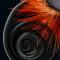 Detalle de la cabeza de una mariposa.
