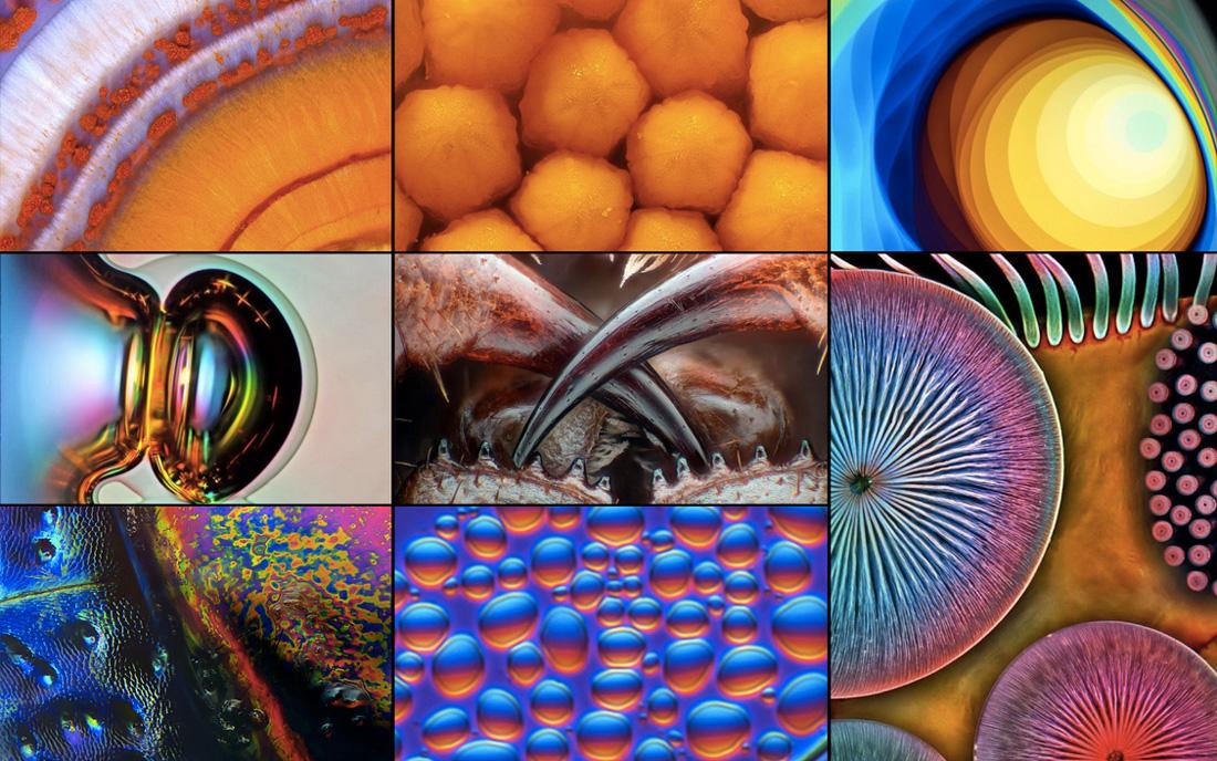 """Concurso de fotografía microscópica """"NIKON Pequeños Mundos."""
