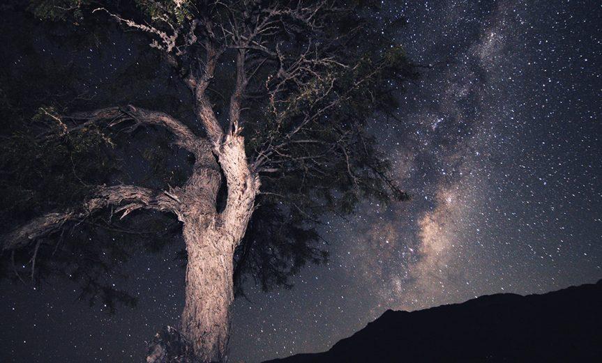 """""""Raíces en el cielo"""" Mejor Foto Nacional Autor: Samuel Ropert. Providencia. """"Ahí, en una galaxia, en una estrella, en un planeta, en una montaña, vive un viejo algarrobo que espera la noche para intentar tocar el centro de la Vía Láctea"""" Valle El Sauce, Río Hurtado, Región de Coquimbo."""