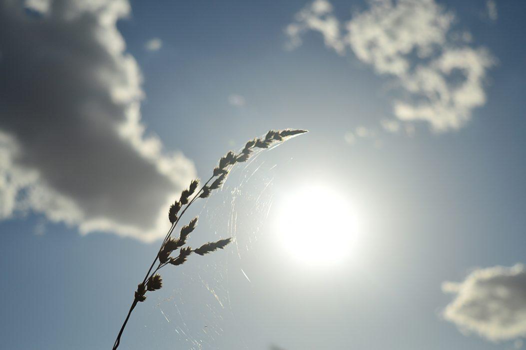 """""""El giro de vida""""  Mención Honrosa  Autor: Cristián Moll. Las Condes.  """"Una maleza es parte de una telaraña que se mece con el viento y se ilumina con el Sol, generando un espiral de vida"""" Campos de Osorno, Región de los Lagos."""