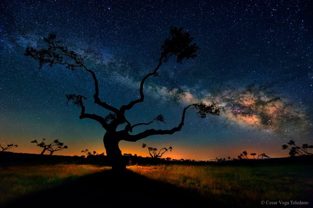 arbol-galaxia