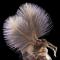 Jan Rosenboom, de la Universidad de Rostock de Alemania, combinó varias imágenes tomadas a diferentes distancias de enfoque para producir esta vista de un mosquito macho.  Imagen de Jan Rosenboom, Universität Rostock